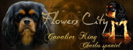 Flowers City Cavalier King Charles Spaniel